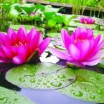 lotus1_2006-kl-farbkorr